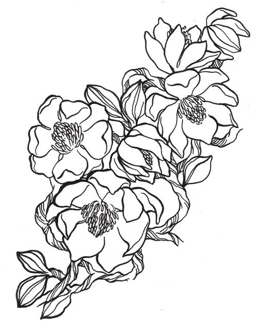 101 Florals Magnolia Jumper Flower Coloring Pages Coloring