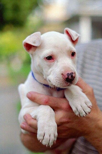 So Cute Nanny Dog Cute Animals Bulldog Breeds