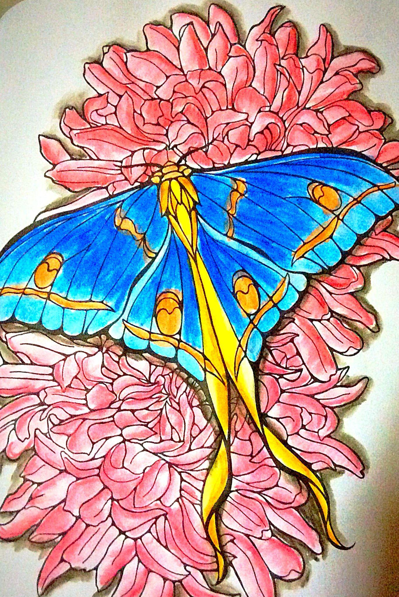 Faber Castell-Albrecht Durer - Butterflies by Ruth Heller ...