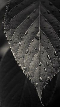 Mi 5 Wallpapers The Macro Leaf Android Wallpapers Pretty