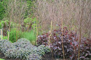 Podpory Naturalne Dla Roslin Plants Garden