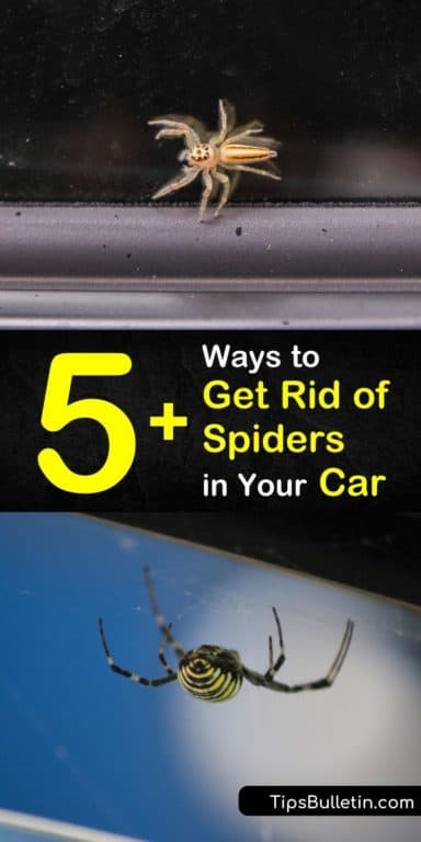 c9feb075a8ccfb23ea6050f4b6c93422 - How To Get Rid Of Spiders From Your Car