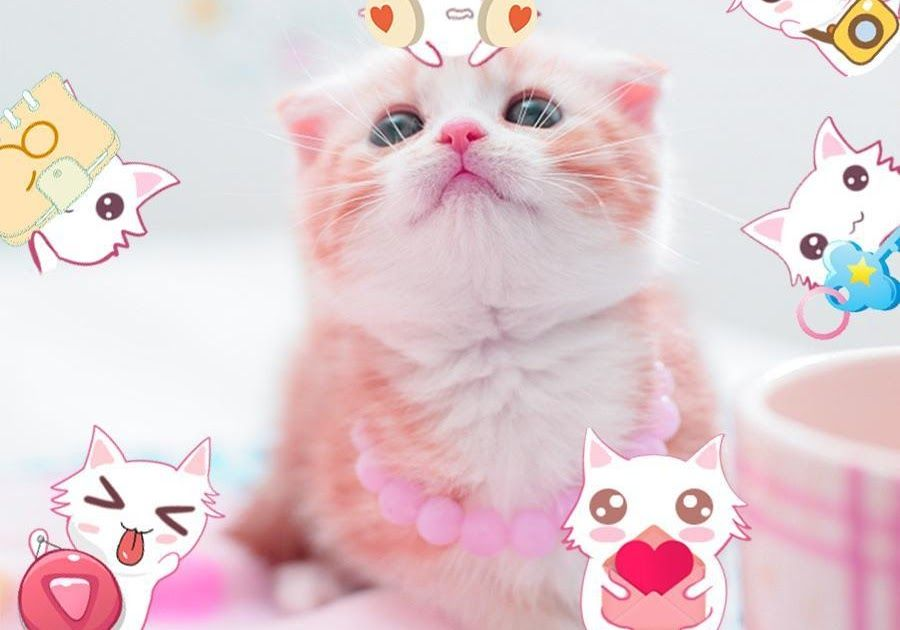 Wallpaper Kucing Lucu Iphone