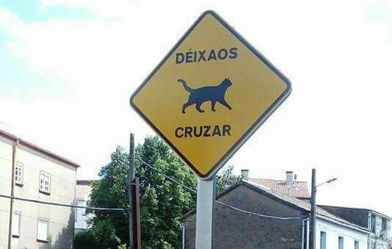 Sinais para advertir aos condutores da presenza de gatos e de parrulos