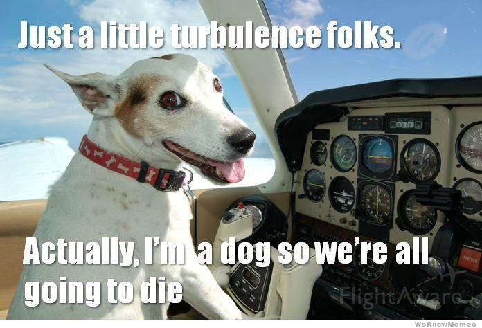Pin By Amy Brown On Random Funny Dog Memes Funny Dogs Funny Dog Captions