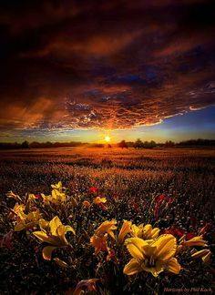 Photographer Phil Koch created a series of horizons in 2010 as a photographic journey through the landscapes of Wisconsin. Description from photographyblogger.net. I searched for this on bing.com/images
