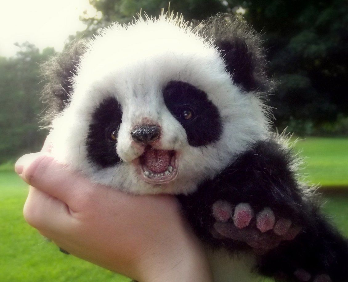 cute animals | cute panda bear cub - wild animals wallpaper - free
