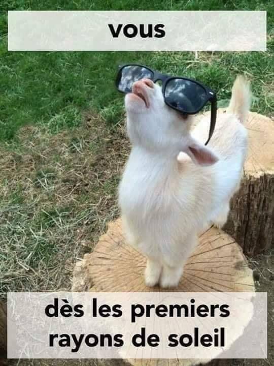 vous dès les #premiers rayons de #soleil !!! #blague #drôle #drole #humour #mdr #lol #vdm #rire … | Animaux drôles les plus mignons, Animaux amusants, Images drôles