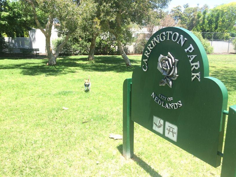 Carrington Dog Park Nedlands Dog Park Park Dogs