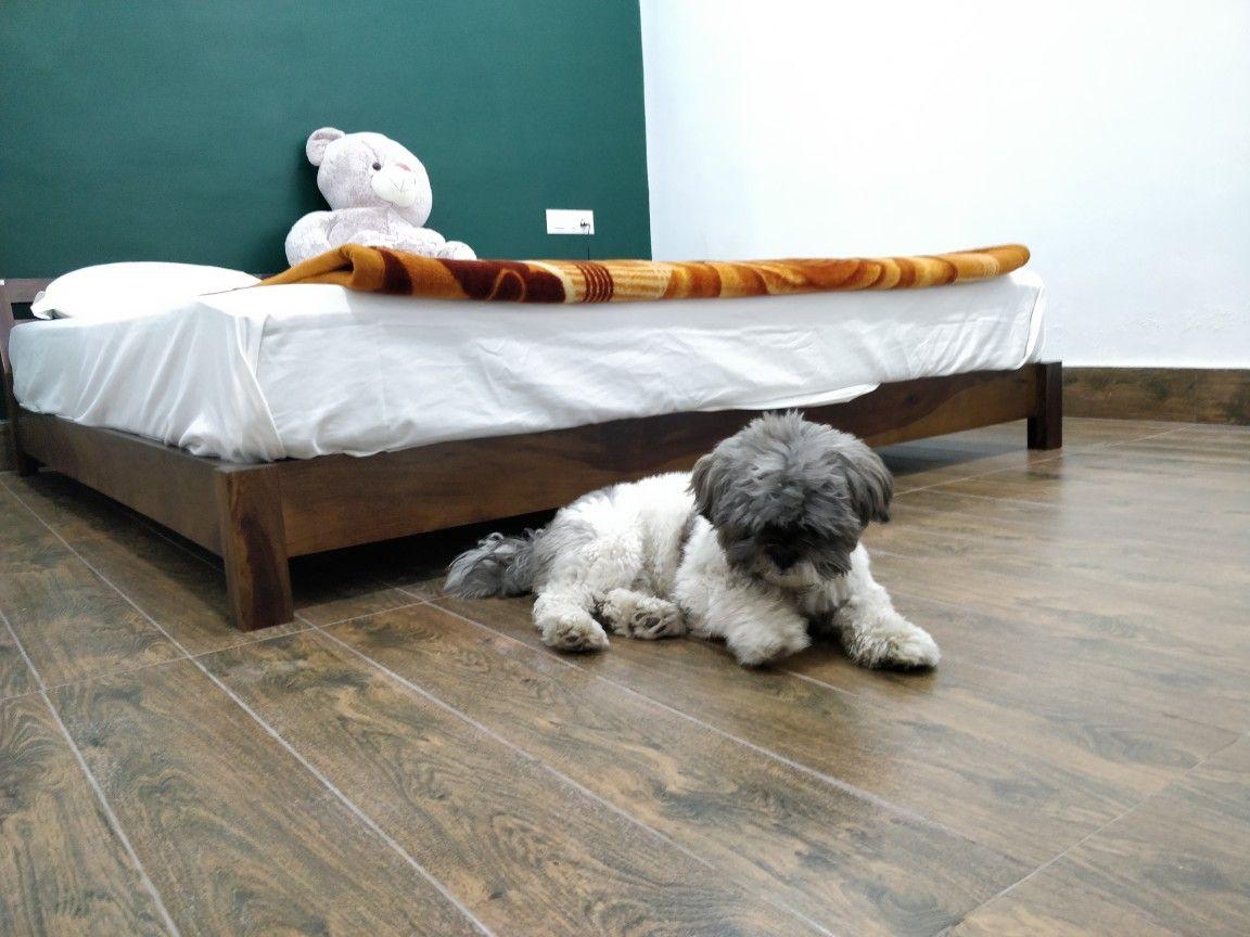 #dog #pup #lhasa #roomideas #minimaldecor #bedroom #cuddle
