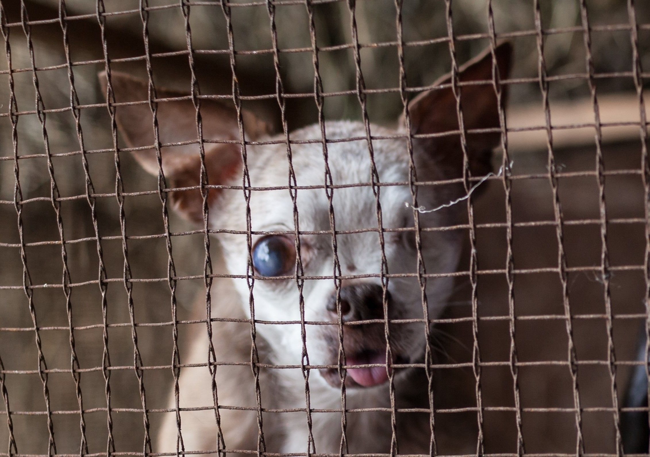 California Puppy Mill Bill Is Now State Law Puppy Mills Dogs