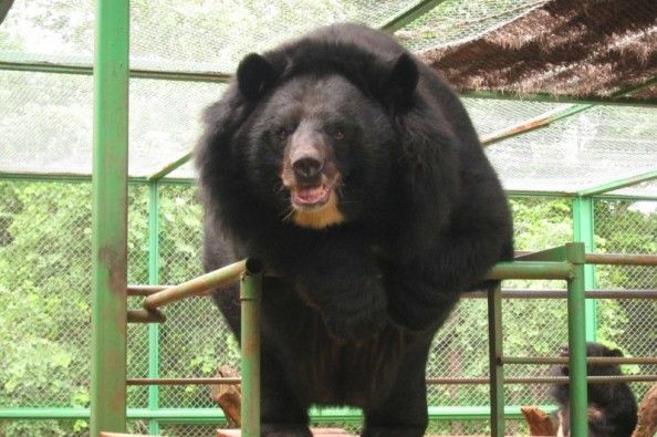 Bear Enclosure Extention, Tiger Temple on GoFundMe - $380 raised by 8 people in 2 months.