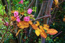 Herbstfarben der Natur