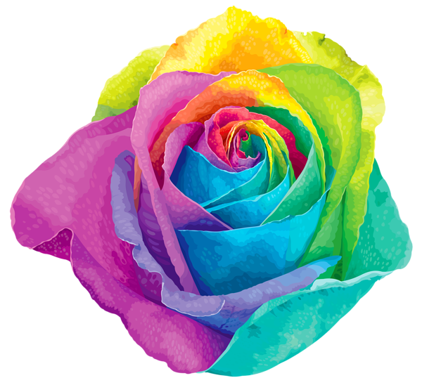 Multicolored rainbow rose transparent png clip art image for How to make a multicolored rose