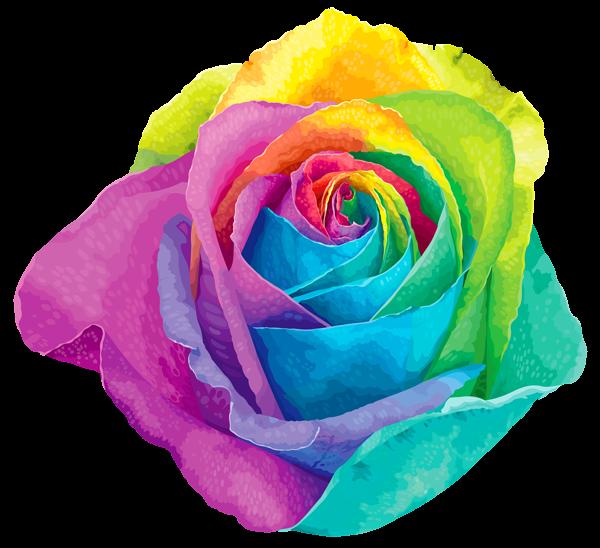 Pin by Anahita Daklani on Roses Rainbow roses, Vector