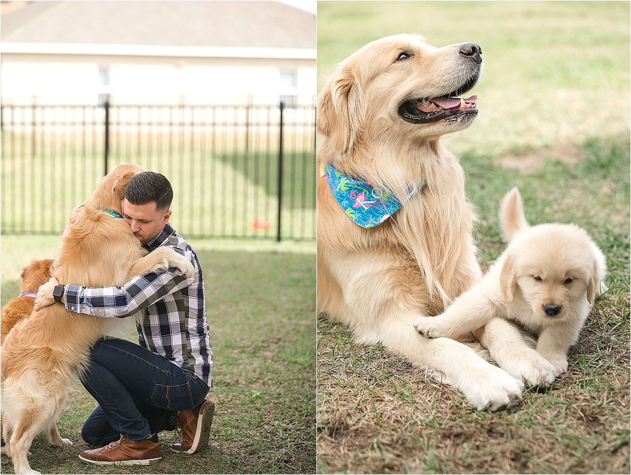 Golden Retriever Puppy In Home Session Lbalagtasphotography