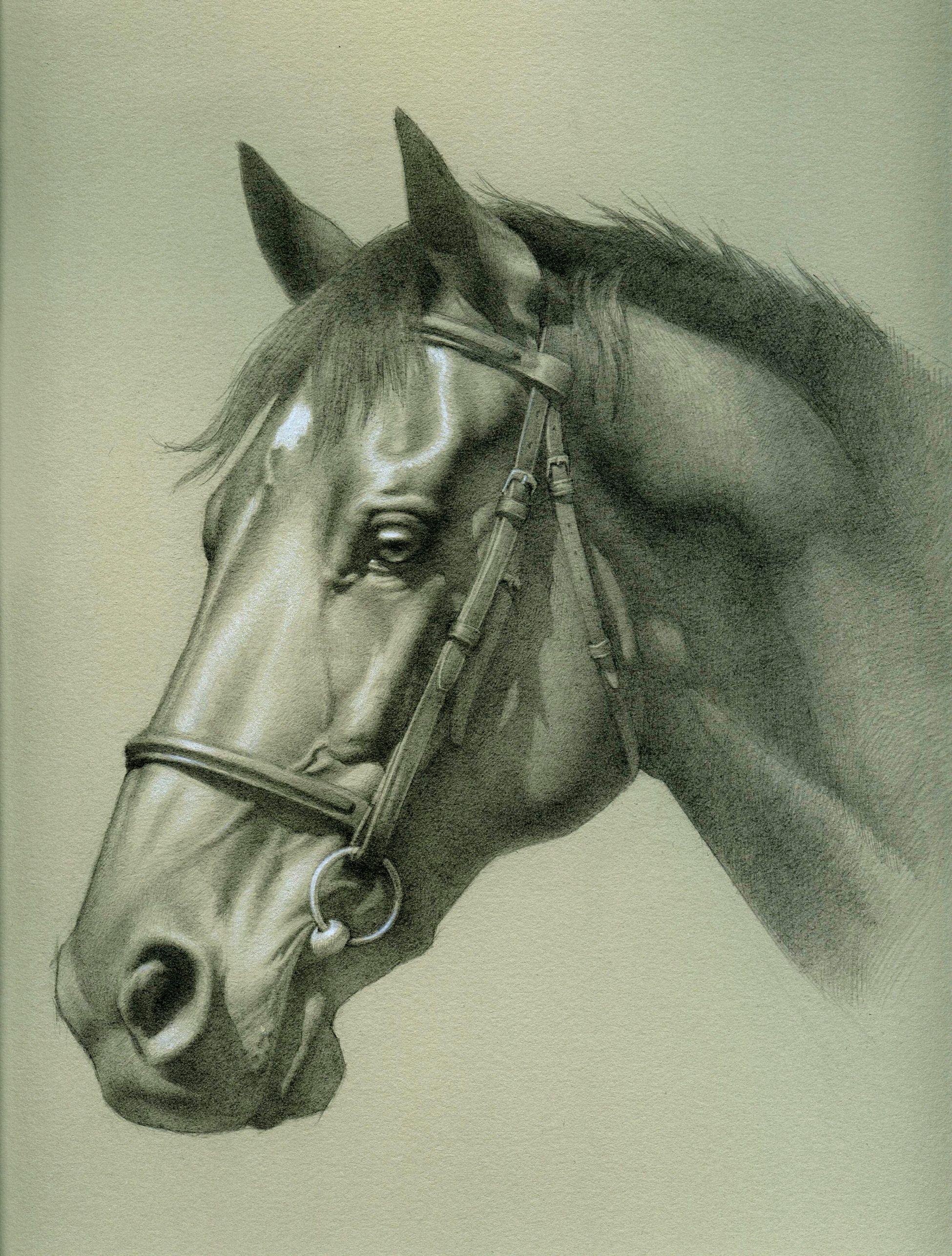 Голова лошади рисунок карандашом