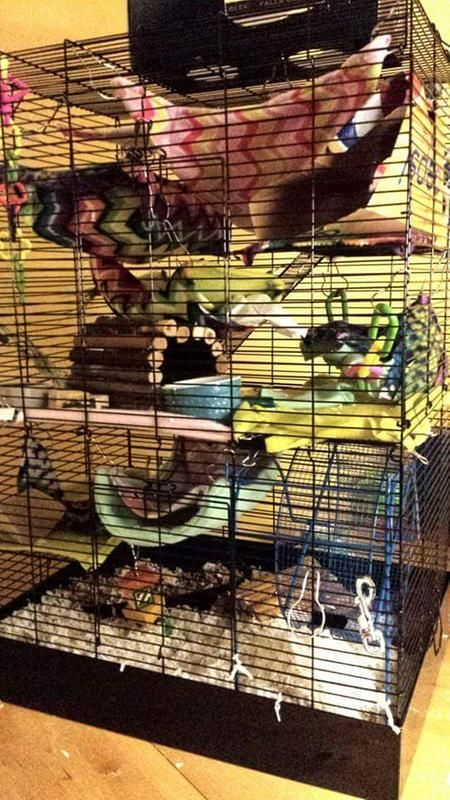 You \u0026 Me Rat Manor Habitat, 16.5\