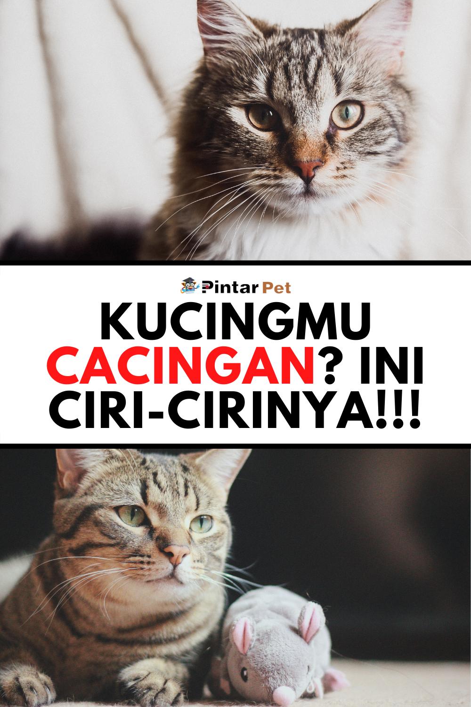 Kenali Penyebab Ciri Ciri Dan Cara Mengobati Cacingan Pada Kucing Kucing Pengikut Bikini