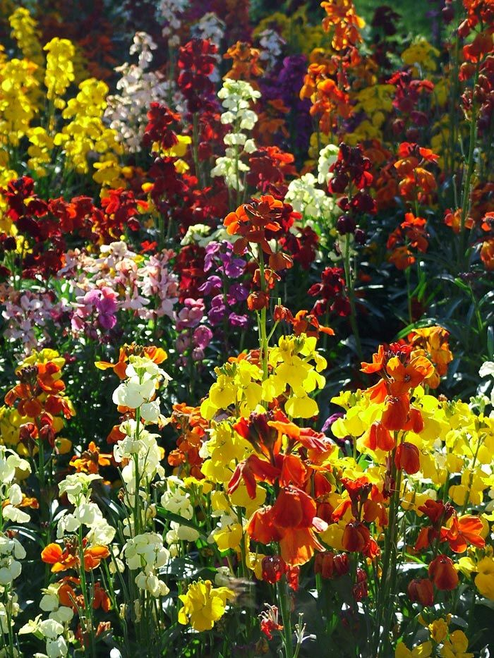 Colourful Flowers In Garden Park Gardens Page 1 2 Mooseyscountrygarden Com Images