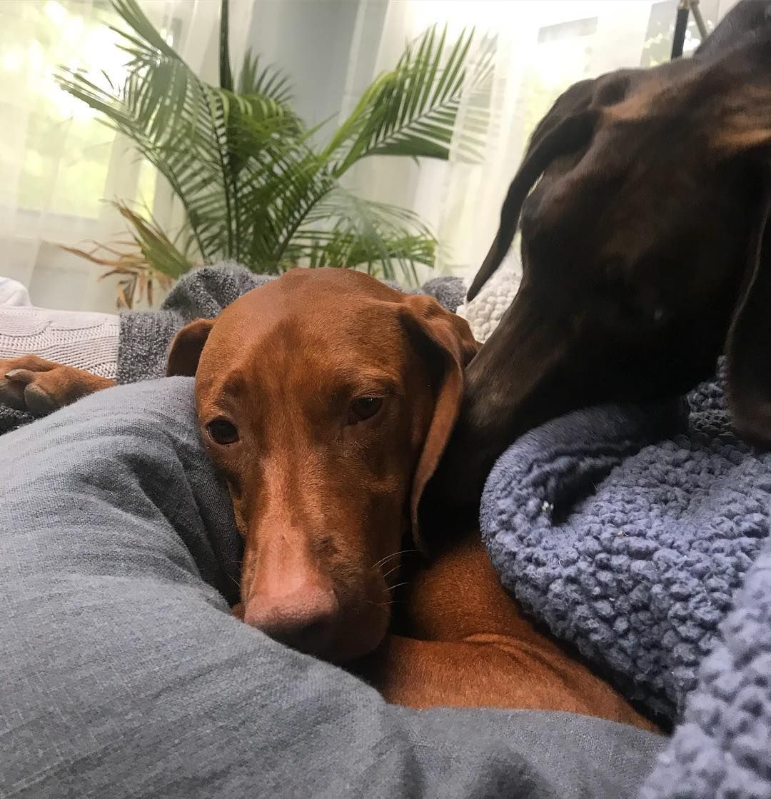 When your brother sneaks in for that Sunday morning cuddle