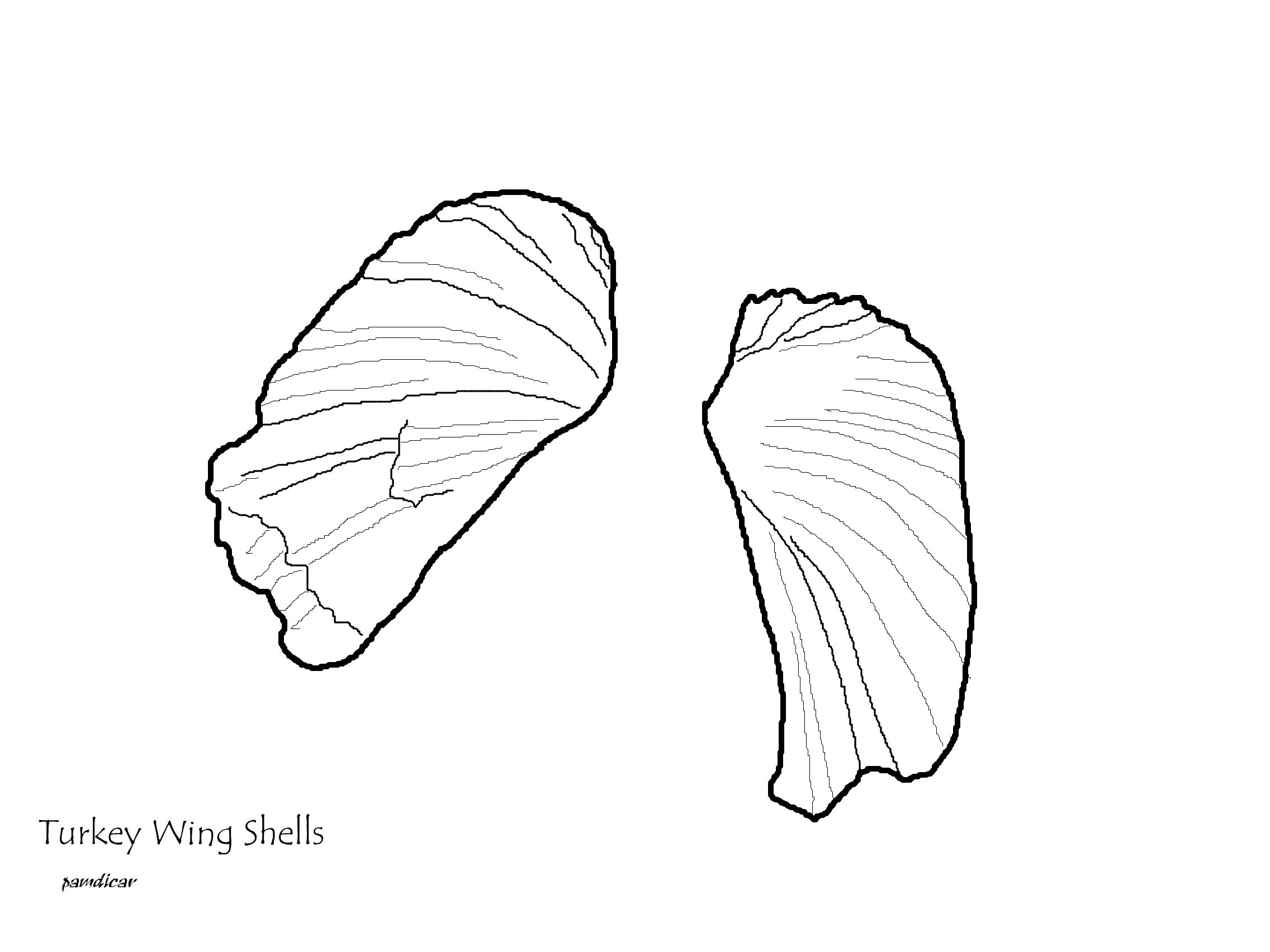 Coloring Page Seashells By Millhill Coloring Pages Color Turkey Wings