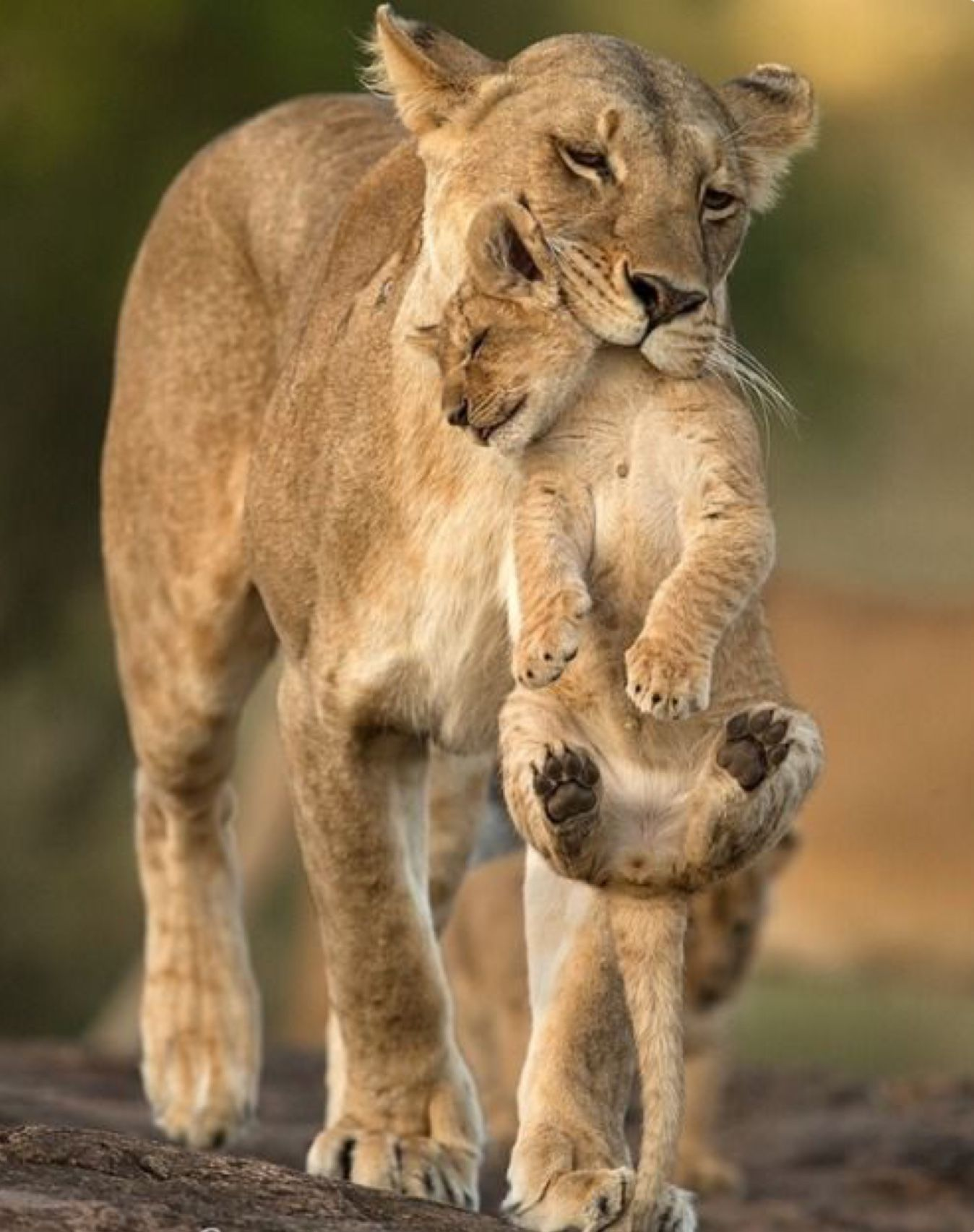 Картинки мамы и детеныши животных