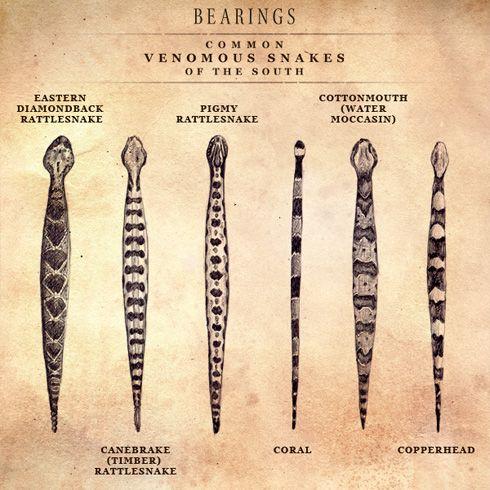 Common Venomous Snakes Of The South Survival Skills Poisonous Snakes Survival