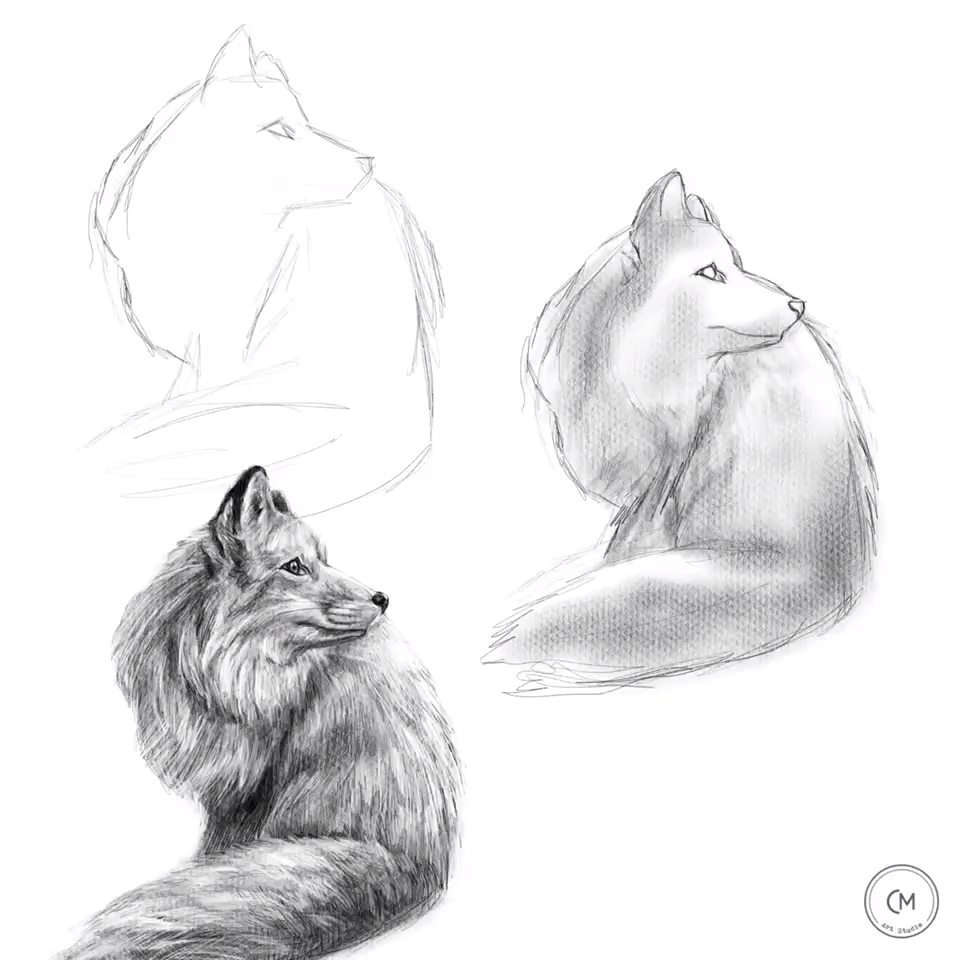 How to draw a fox, learning, drawing, art education, #tutorial #techniques