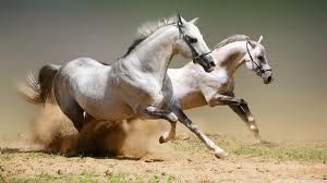Federal Government has approved the slaughter and consumption of horse meat, 06/28/13  http://news.yahoo.com/animal-welfare-groups-mexico-leaders-appalled-usdas-decision-183600618.html;_ylt=A2KJ2Ui09s1RCmoASmPQtDMD