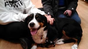 Daisy Is An Adoptable Cocker Spaniel Dog In Rockford Il Daisy Is