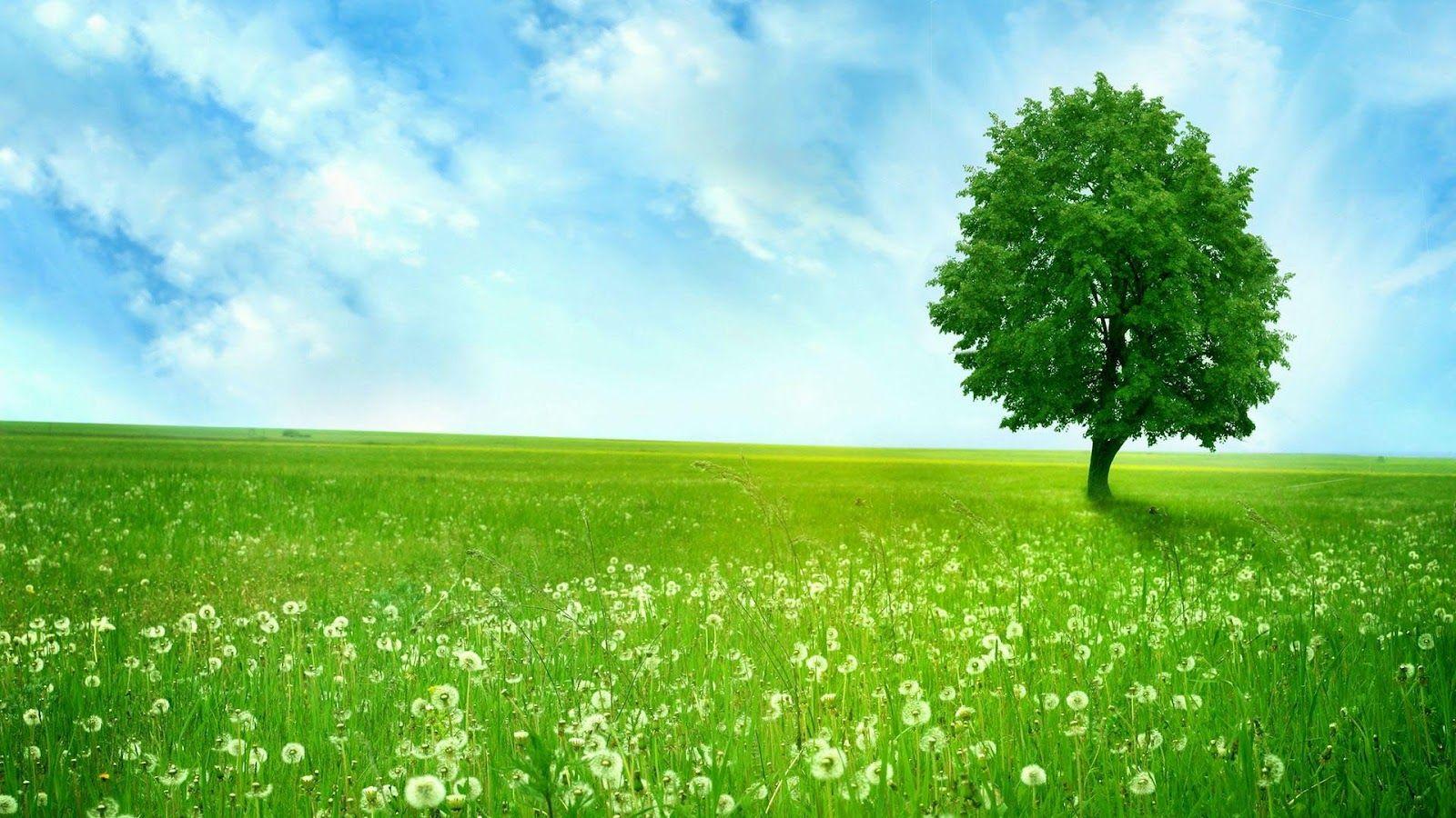 achtergrond gras boom google zoeken anne school pinterest gras zoeken en google. Black Bedroom Furniture Sets. Home Design Ideas