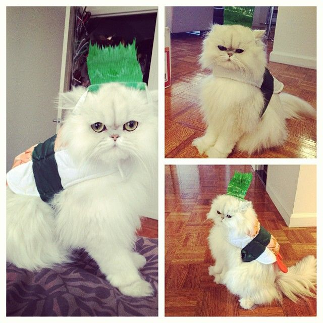 Pin for Later: 65 Pet Costumes to DIY on the Cheap Sushi