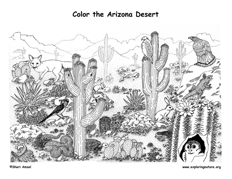 Desert Coloring Page Habitat Desert Animals Coloring Desert Animals Desert Animals And Plants