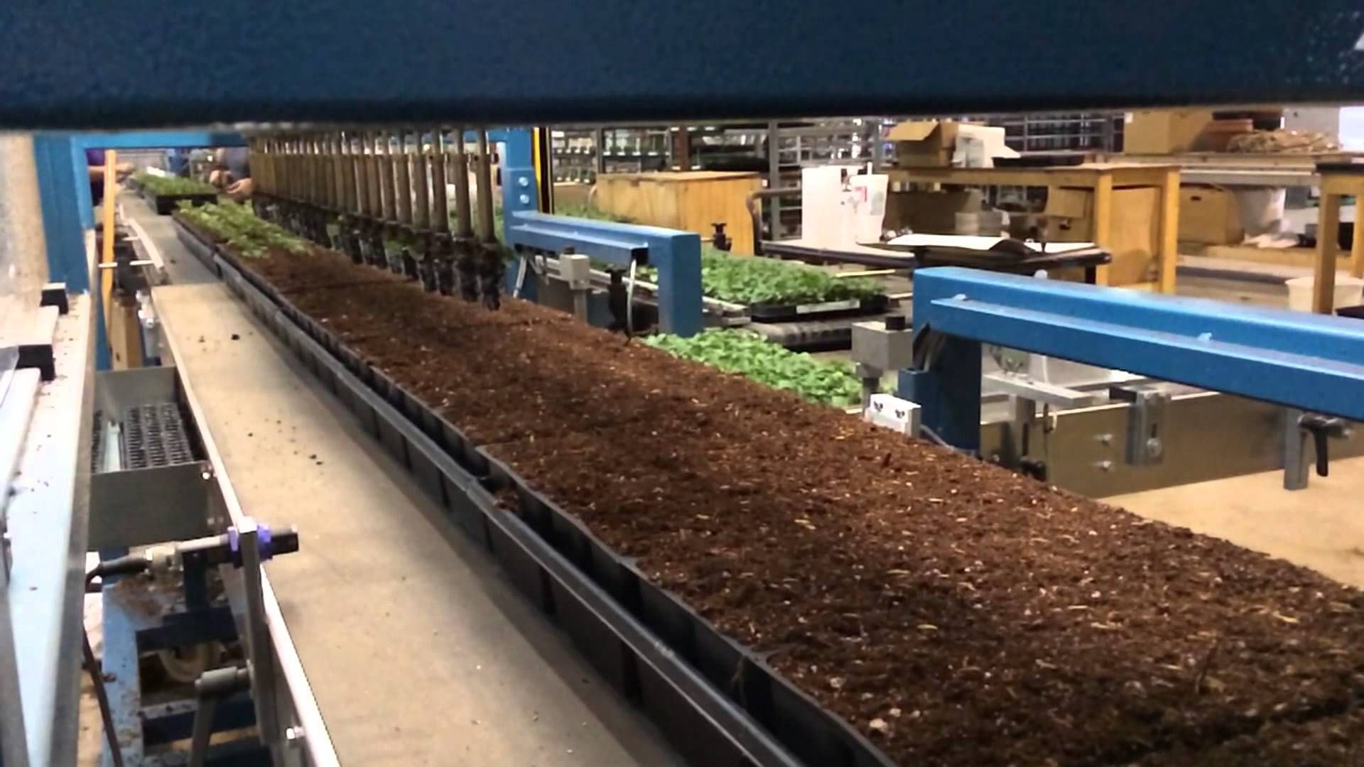 Transplanting Pansies | movies related to technic and machines ...