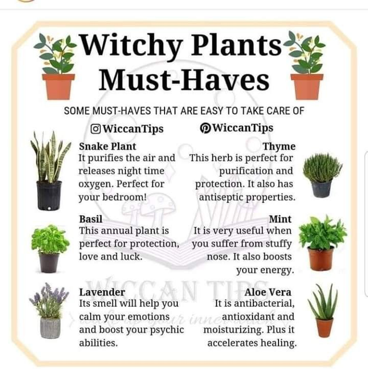 Photo of Witchy Plants Must HaveWitchy # Planter # Must #Have #witchcraft
