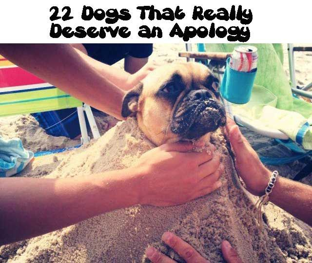 22 Dogs That Really Deserve an Apology
