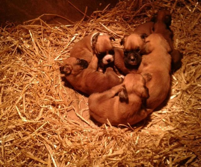 Pup farm you think straw I keep fir the rabbits not the