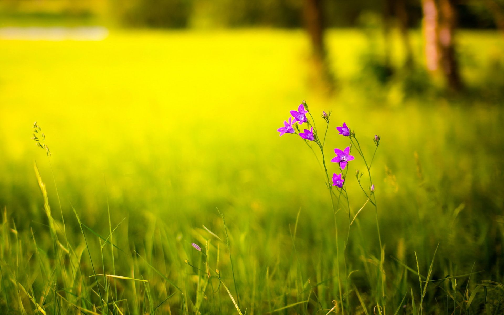 On The Green Blurred Background Miriadna Com Blurred Background Background Desktop Wallpaper