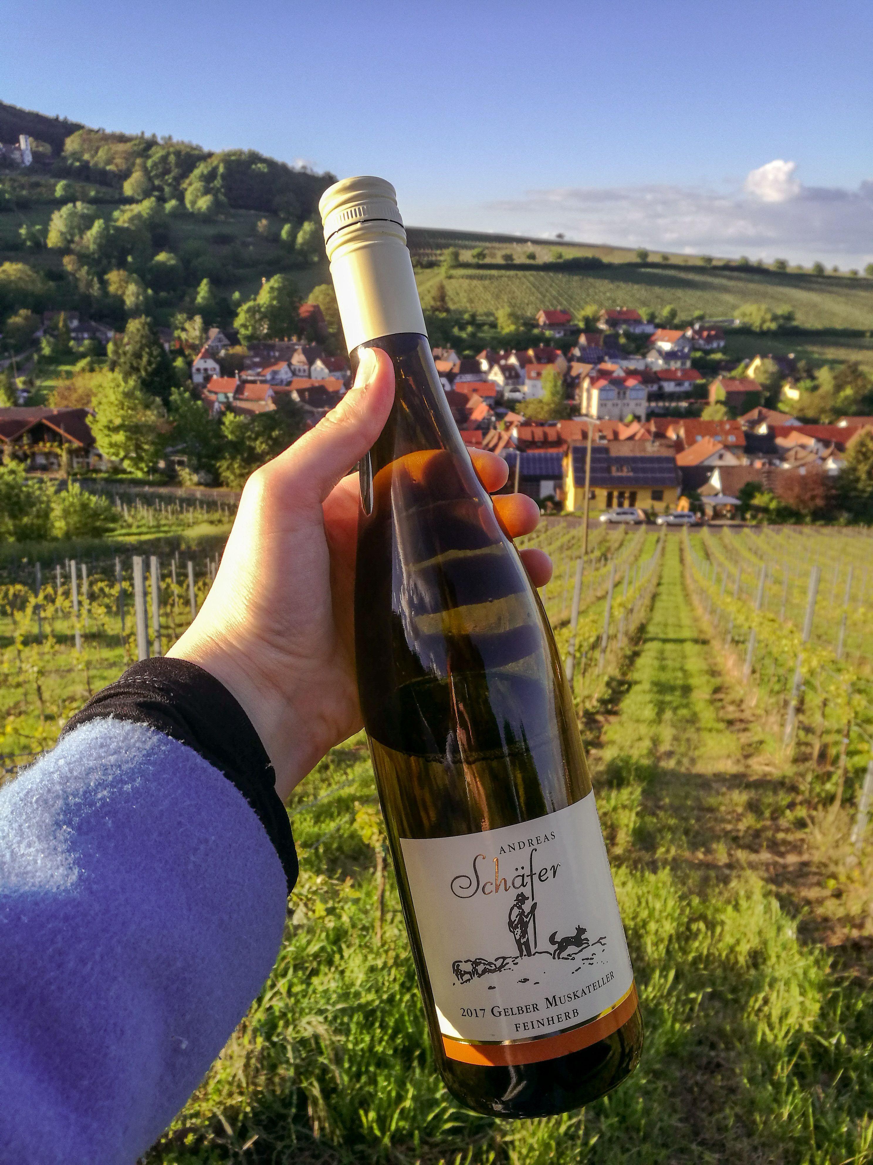 Landau In Der Pfalz Die Schonsten Sehenswurdigkeiten Und Reisetipps Fur Deinen Urlaub Reisen Ausflug Urlaub