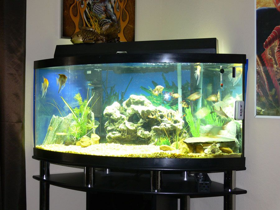 Fish tank house fish tank awesome fish tanks for Fish tank house