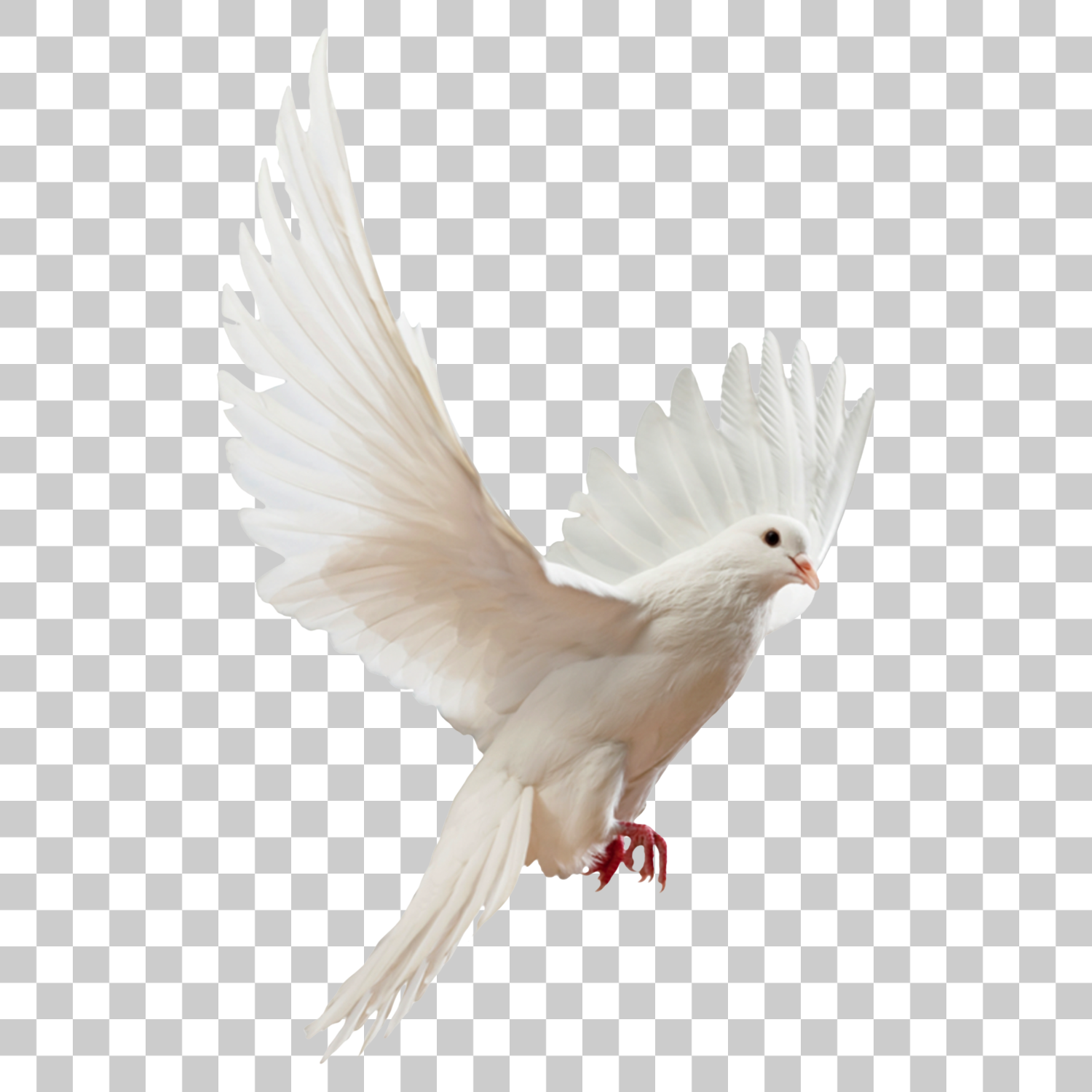 Peace White Bird Free Images Merry Christmas 2021