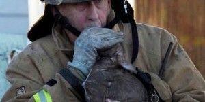 Pompiere fa la respirazione bocca a bocca al cane e lo salva