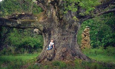 Margy's Musings: Trees