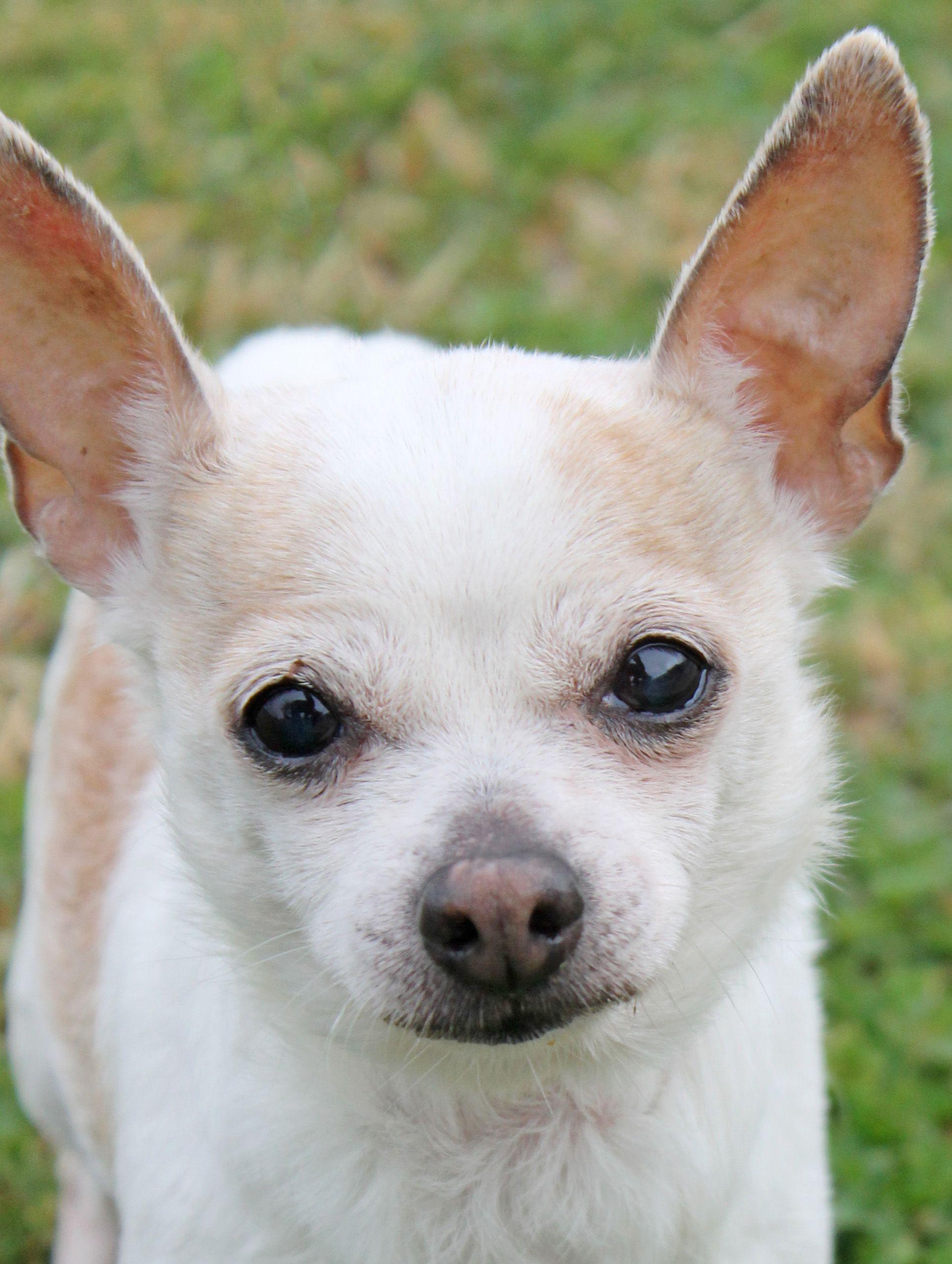 Puppies For Sale In Hattiesburg Ms Ideas