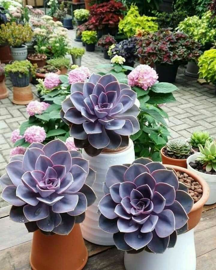 How to transplant a succulent guide