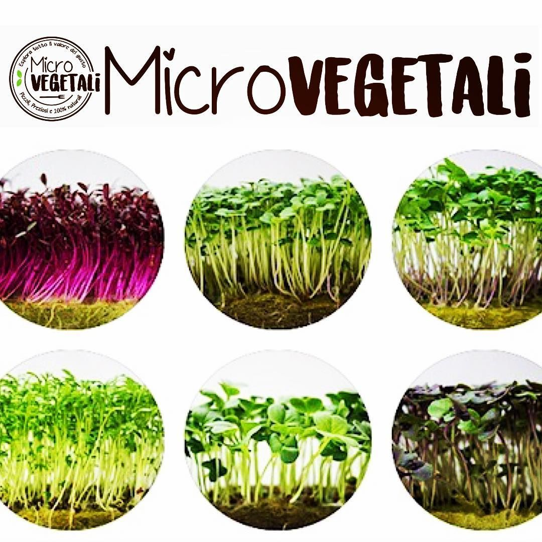 Una piccola tavolozza di color e biodiversità che l'azienda microvegetali propone ai suoi clienti #mangiaresano #urbanfood #agricoltura #micro #microgreens #microvegetales #microvegetali #chef #ristorante #pizza #pasta #carne #pesce #zuppa #panini #bevande  #nutriment #urbanfarm #panino #noOGM #bio #Italia #green #gusto #verticalfarming #indoorfarming #showcooking #Calabria #macrosapori http://www.butimag.com/ristorante/post/1476697298981197692_4164128464/?code=BR-SF6ajZd8