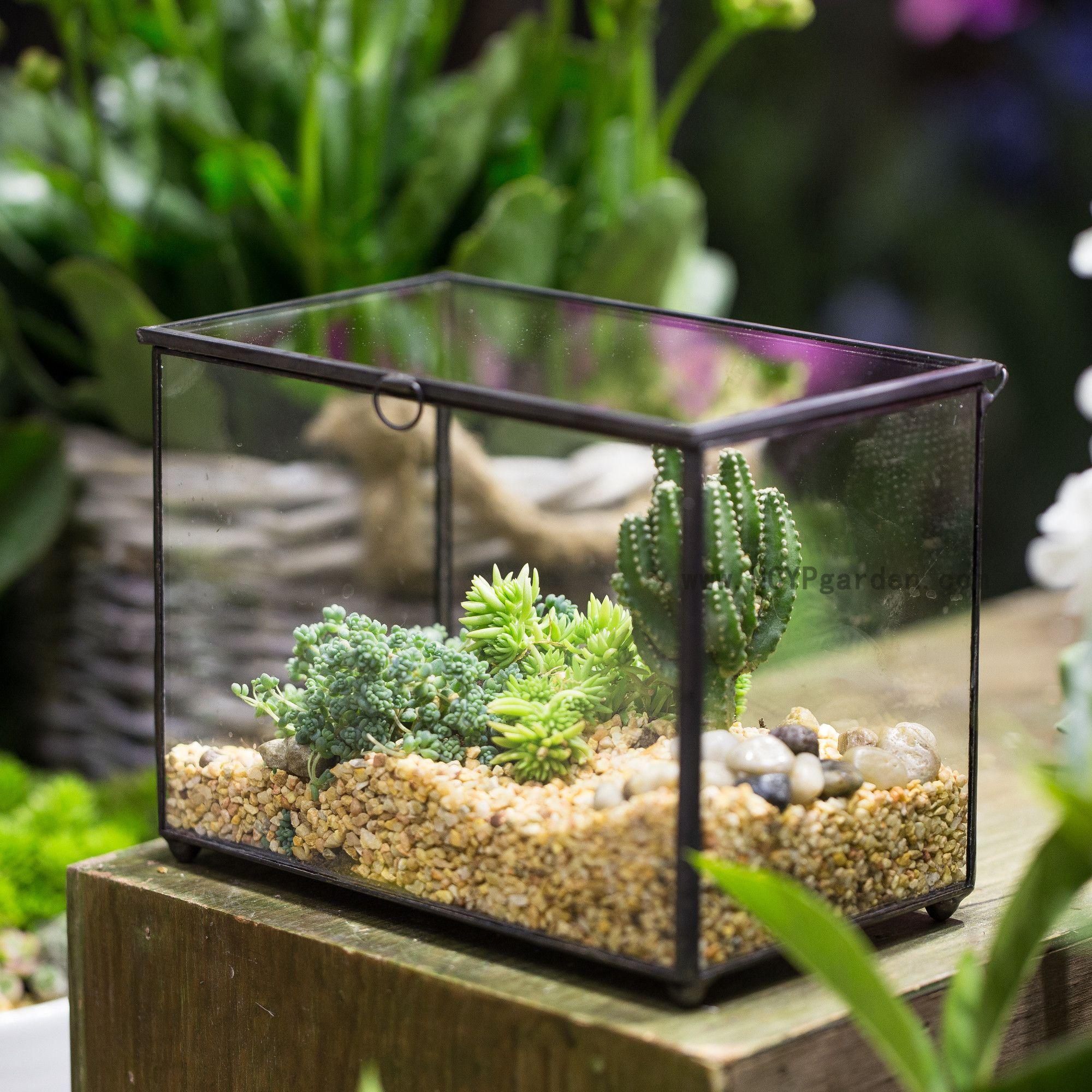 Footed Rectangle Clear Glass Geometric Terrarium Box Tabletop Succulent  Fern Moss Plant Micro Landscape Terrarium Bonsai