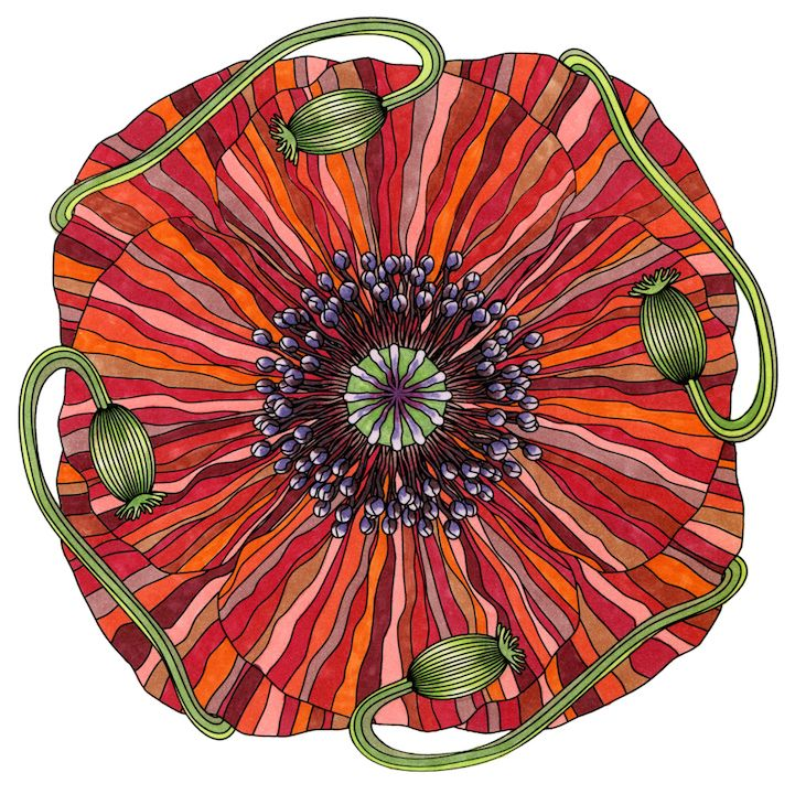 Coloring Flower Mandalas A Garden Inspired Coloring Book That