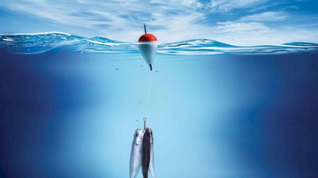 كيفية اصطياد السمك Computer Wallpaper Blue Tang Fish Pet Fish